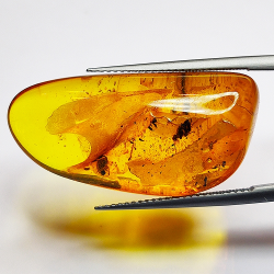 15.27ct Baltic Amber with insect cabochon 31.5x15.7mm