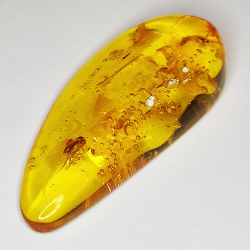 8.58ct Baltic Amber with insect cabochon 34.2x16.1mm