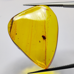 18.97ct Baltic Amber with cicada cabochon 30.3x24.4mm